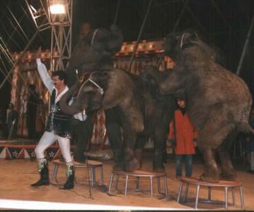victor hugo cardinali com os elefantes nos anos 80