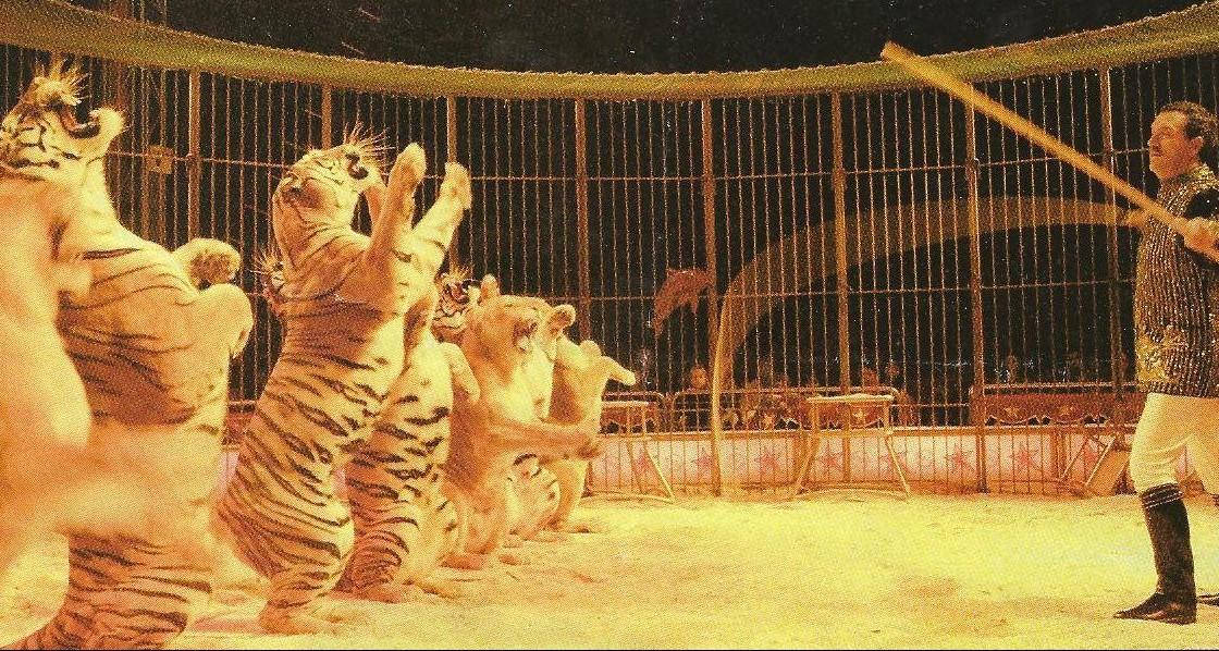 tigres e leoas de victor hugo cardinali nos anos 90