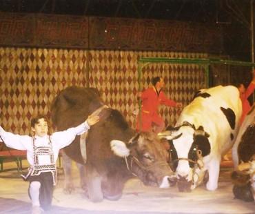 victor hugo cardinali junio no numero de vacas