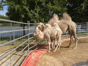camelo-cardinali.circo