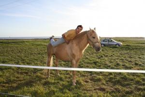 cavalo-cardinali